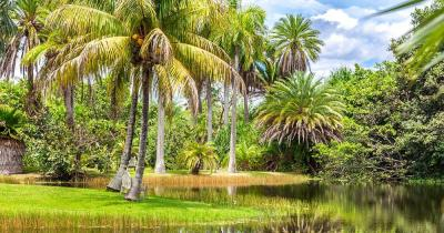 Fairchild Tropical Botanic Garden - Palmeninsel
