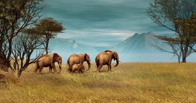 Serengeti-Nationalpark - Elefanten