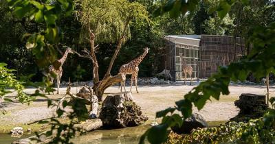 Tierpark Hellabrunn - Giraffensavanne