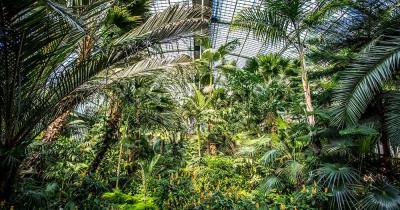 Palmengarten Frankfurt - Palmenhaus