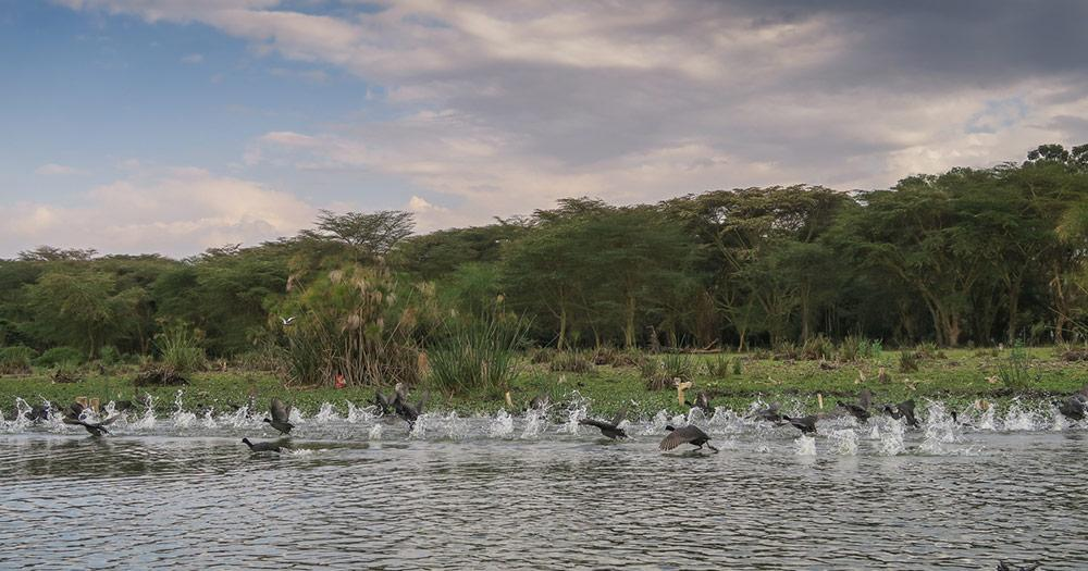 Victoriasee / Vögel am Victoriasee