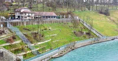 Tierpark Bern / Bärengrube und Bären