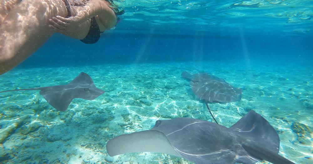 Bora Bora / Frau schwimmt mit Rochen