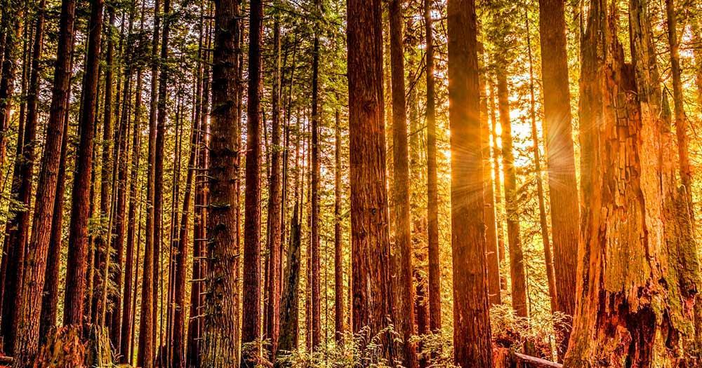 Redwood-Nationalpark / der Redwood-Nationalpark