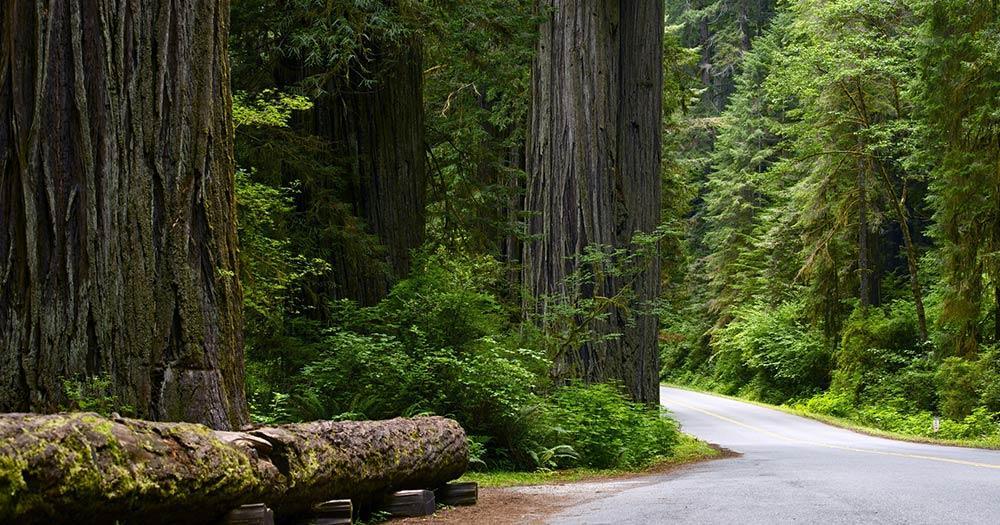 Redwood-Nationalpark / eine Straße durch den Redwood-Nationalpark