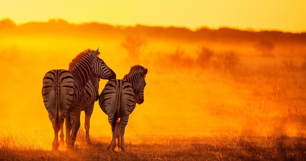 Simbabwe - Zebras im Matobo Nationalpark