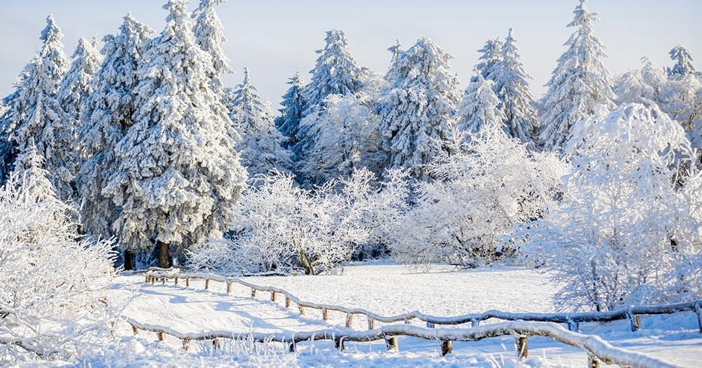 Feldberg - traumhafte Winterlandschaft