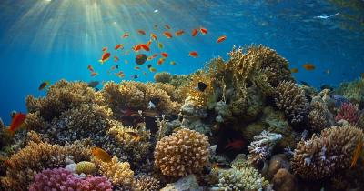 Rote Meer - ein Riff im rotem Meer