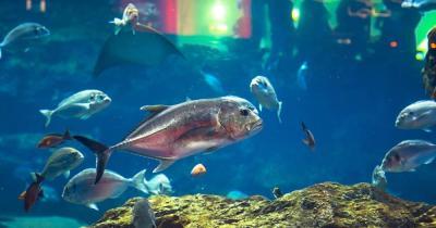 Aquarium Underwaterworld
