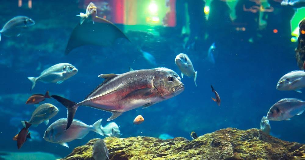 Aquarium Underwaterworld - tropische Fische