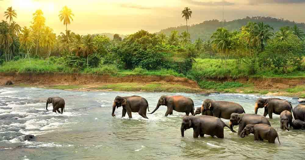 Sri Lanka - Blick auf die Natur