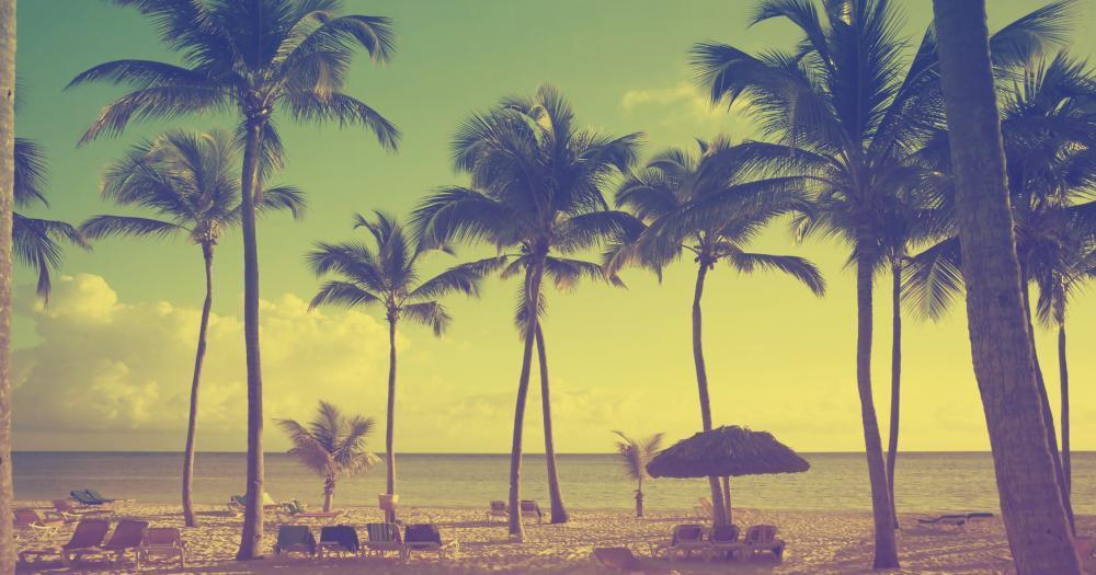 Virginia Beach - Blick auf die Palmen
