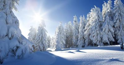 Tiroler Zugspitzarena - Winterliche Waldlandschaft