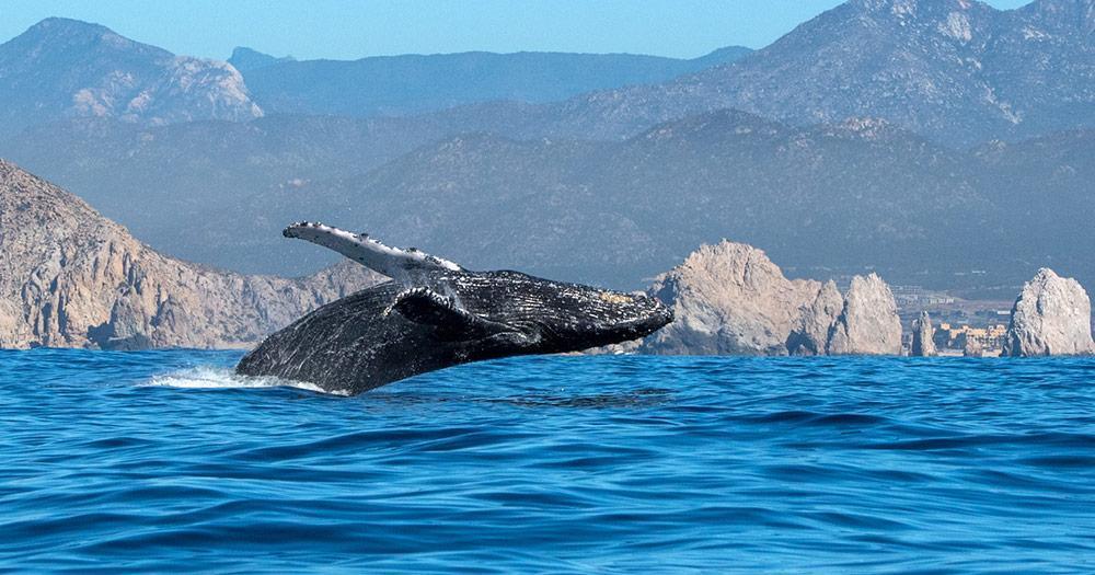 Baja California - Walbeobachtungen