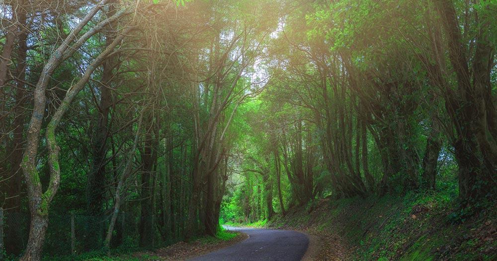 Sintra - alte geheimnisvolle Wälder
