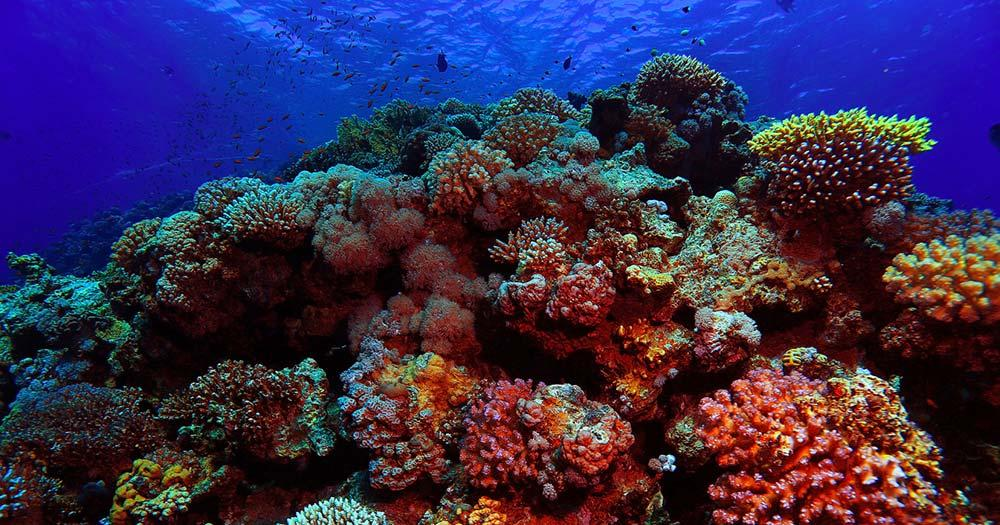 Bunaken - Korallenriff im klaren Wasser
