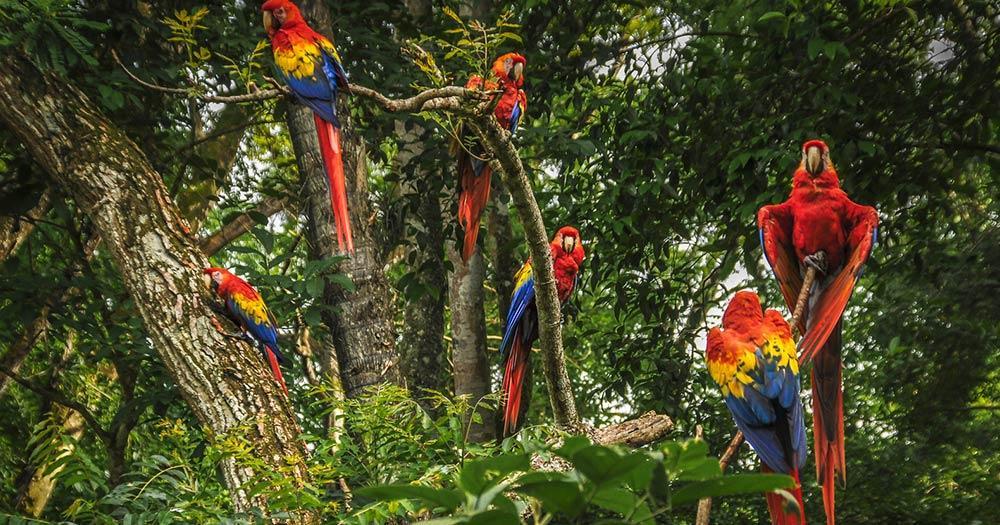 Salvador - Baum voller Aras