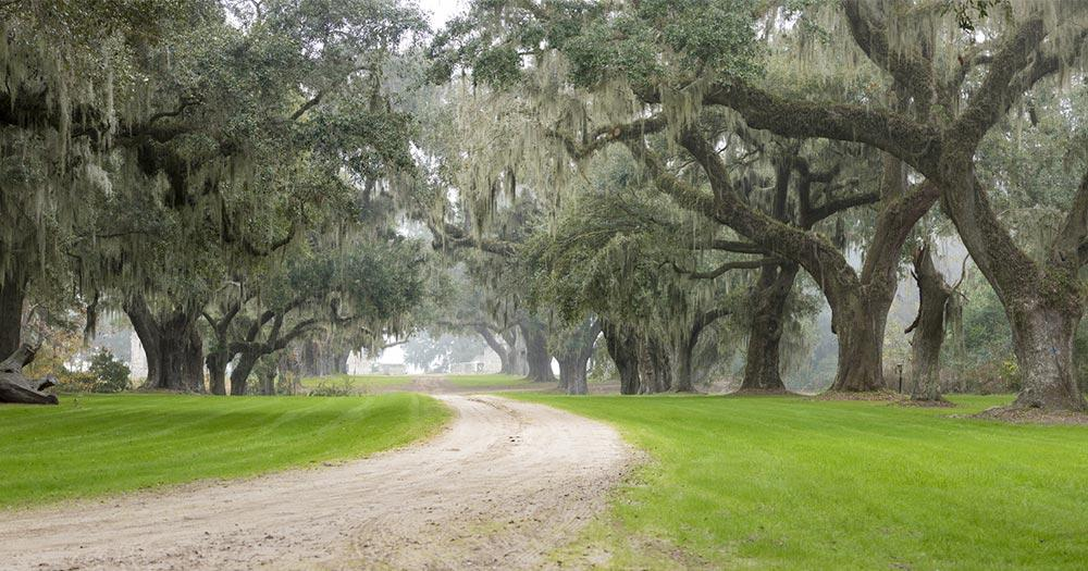 Charleston - Plantage im Nebel