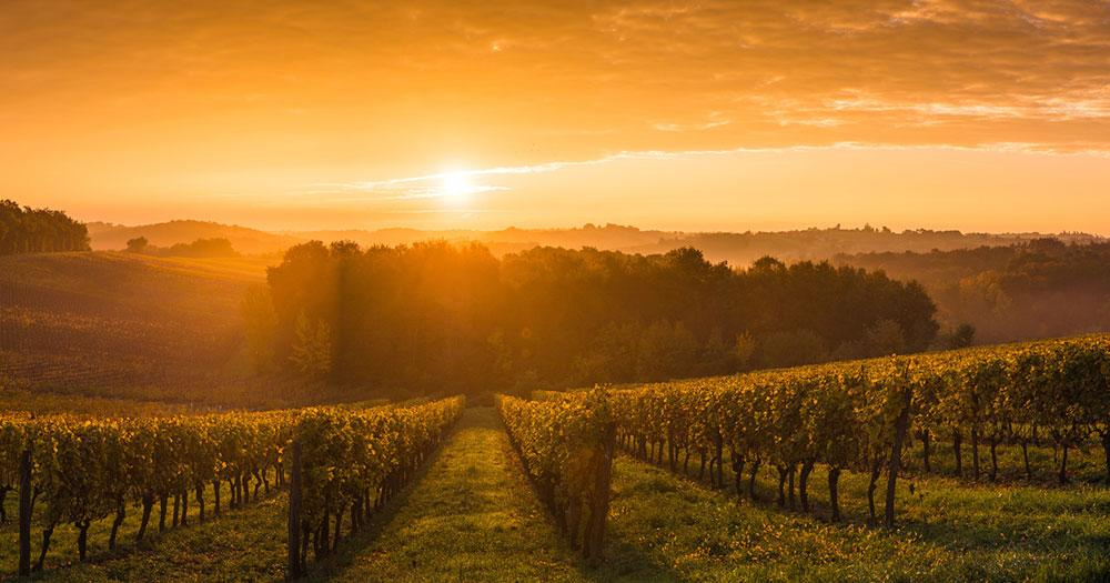 Bordeaux - Sonnenuntergang über den Weingärten