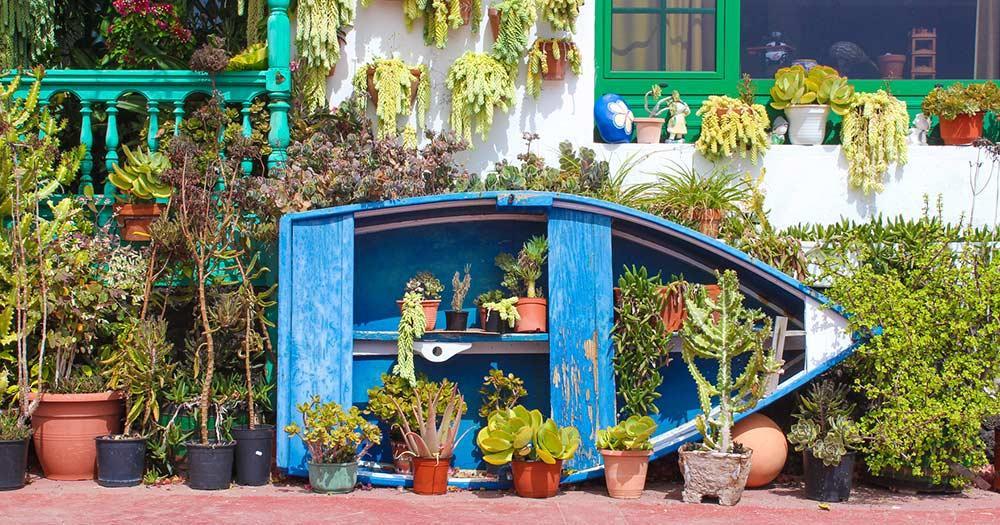 Kap Verde - Blumen