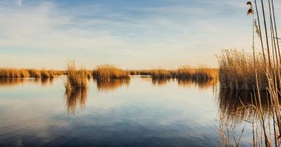 Neusiedler See - Naturschutzgebiet