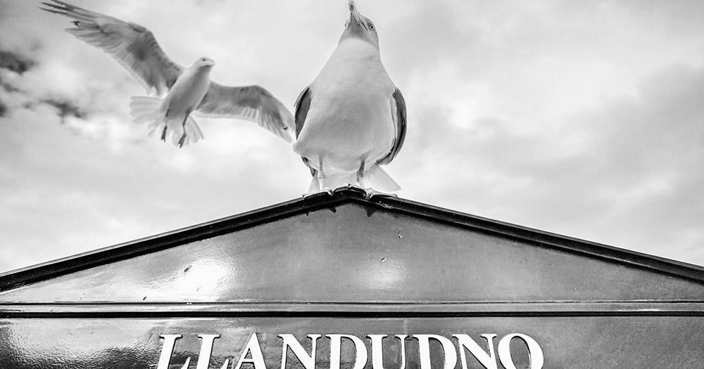 Llandudno - Möwe auf dem Schild