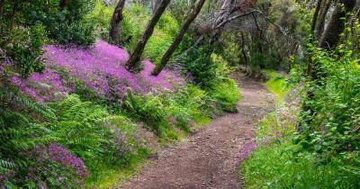 Nationalpark Garajonay - Waldweg mit Blumen